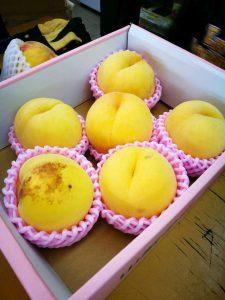 黄金桃 黄色