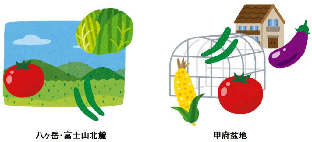 山梨 野菜 甲府盆地 富士北麓