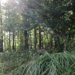 魅力あふれる山梨の「森のようちえん」を紹介します!プレに参加した体験談も