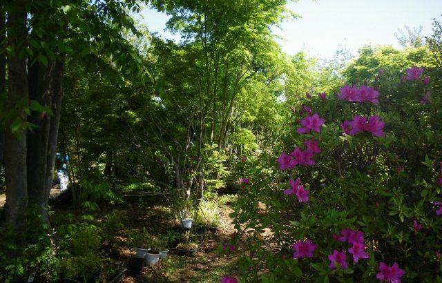 【山梨】春は植木市の季節♪2019年オススメ7ヶ所を紹介!植木・花・苗・ハーブ・山野草など