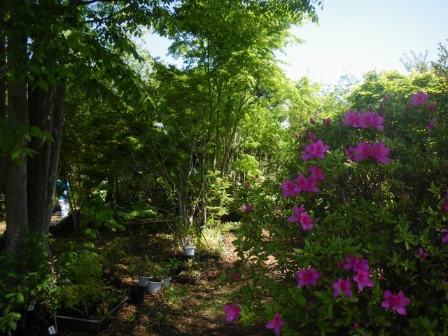 【山梨】春~初夏は植木市の季節♪オススメ7ヶ所を紹介!植木・花・苗・ハーブ・山野草など