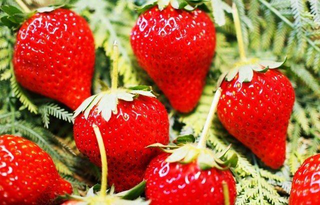 【ゴールデンウィーク】山梨で果物狩りに行こう!