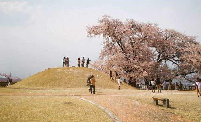 八代ふるさと公園 古墳 桜
