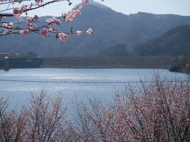 昇仙峡 桜