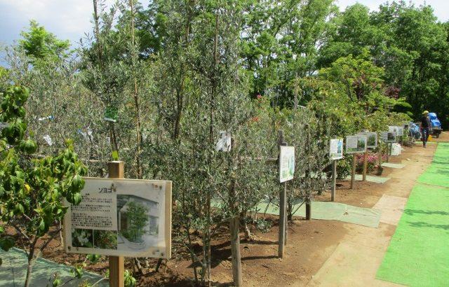 山梨県甲斐市【中込造園】植木市はシンボルツリー選びに最適!