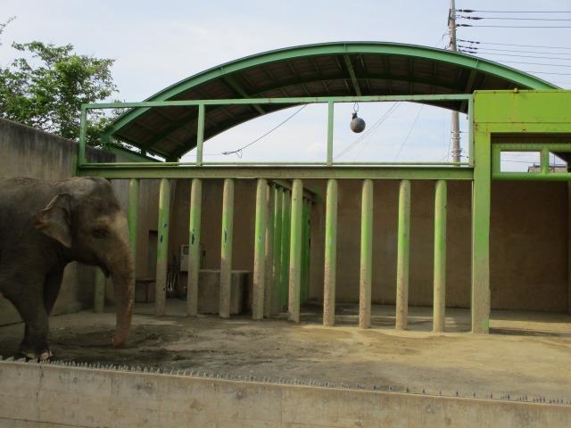 遊亀動物園 アジアゾウ テル
