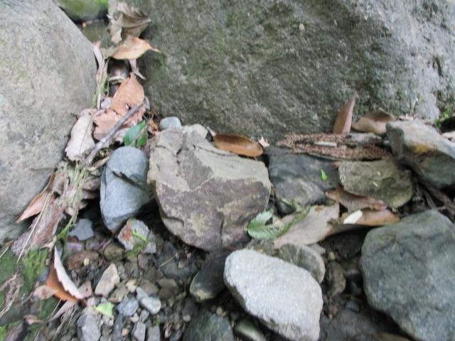 身延町 川 化石