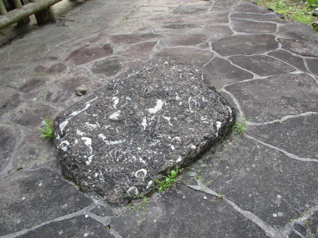 身延町 化石