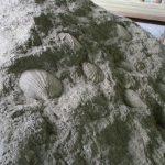 山梨は昔、海だった!化石に触れる公園が身延町にあった【後山川砂防化石公園】