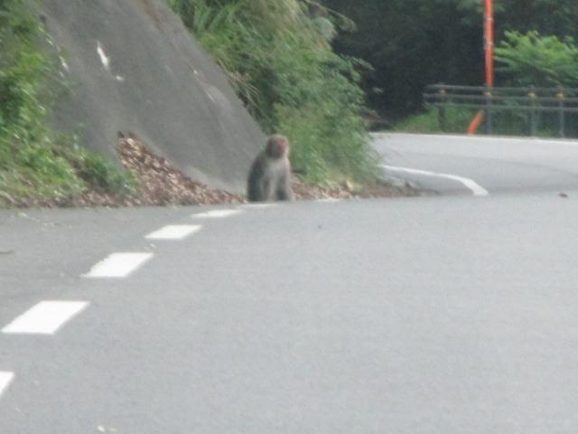 身延町 化石公園 サル