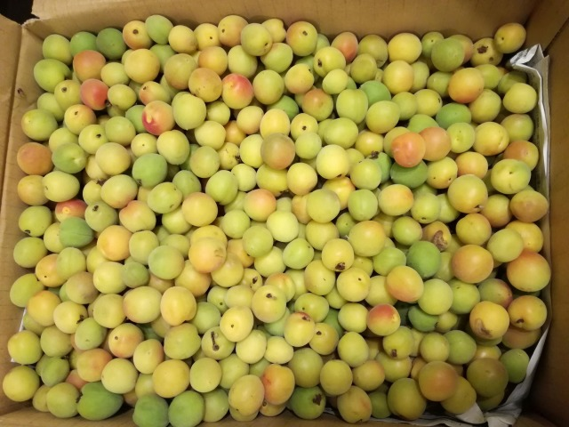 わずか4日で完成!黄色い梅で作る♪発酵しない梅シロップのレシピを ...