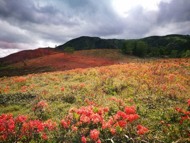 甘利山ツツジの色が空に反射して空もツツジ色に染まった