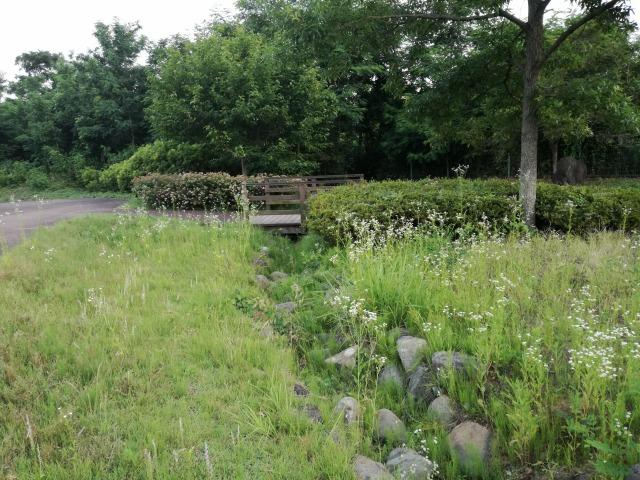 双葉水辺公園の小川の様子