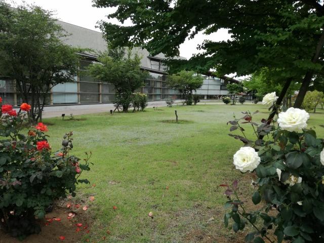 かいゆうパークの庭園のバラや植栽