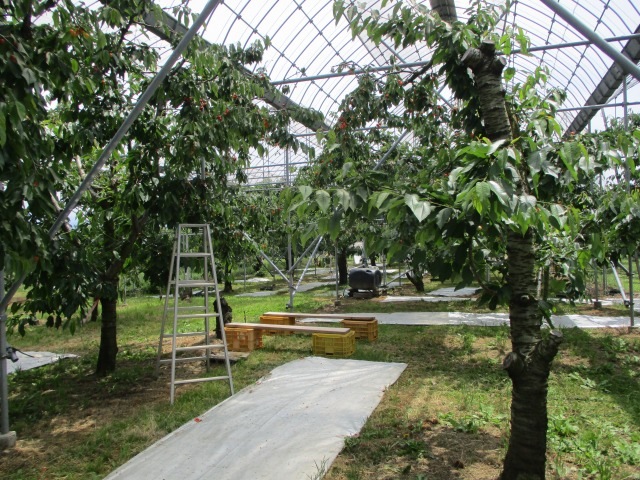 農園の中 南アルプス市 観光協会 土