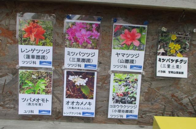 甘利山のツツジの種類について看板の写真