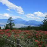 【甘利山登山】山頂まで30分!大パノラマの富士山とツツジの大群落