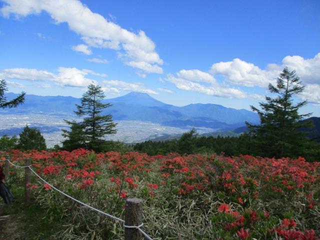 甘利山から見る富士山とツツジが素晴らしい
