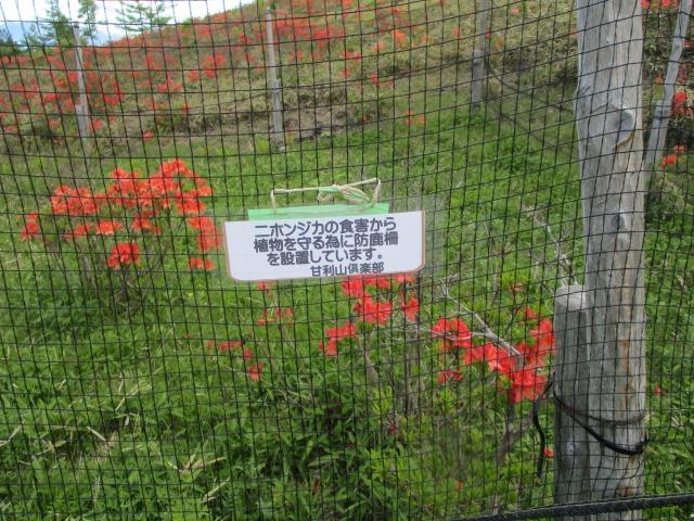 シカによる食害から守るためにネットを張っているという看板