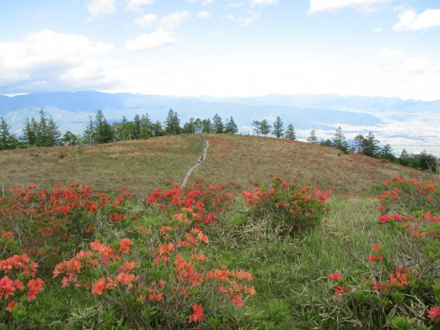 甘利山山頂から見るとツツジで周りが赤く見えて素敵