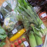 JAよってけしで購入した野菜全部