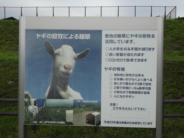 ヤギによる除草作業について