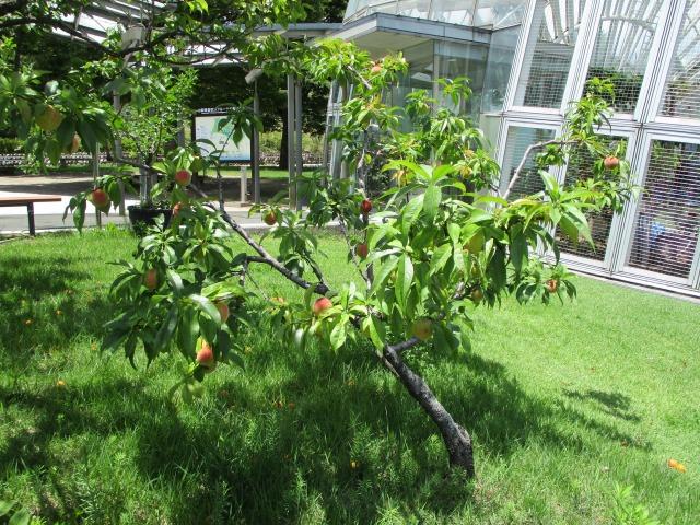フルーツ公園はところどころにフルーツの木が植えてある