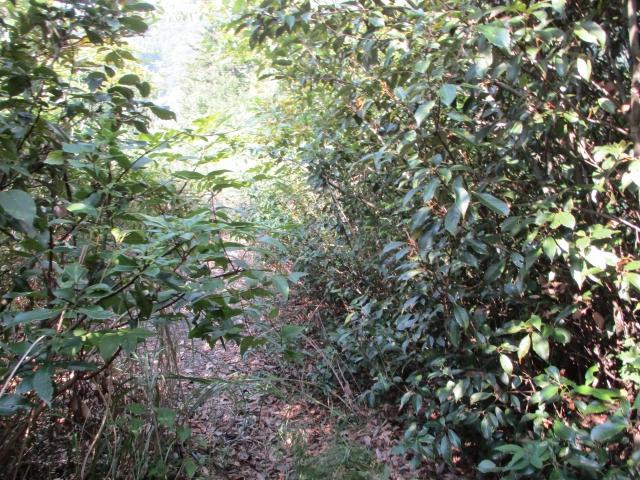 展望台までの道は藪