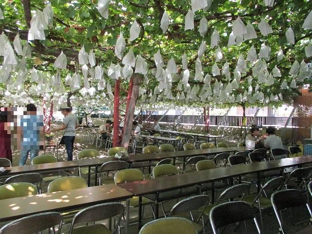 早川園のテーブルイス