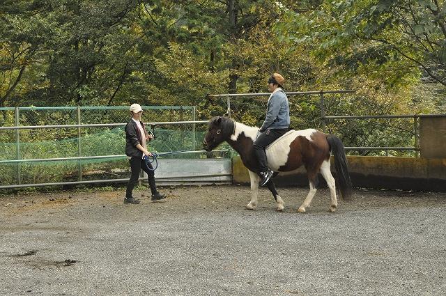 うまカフェ馬場内で乗馬体験レッスン