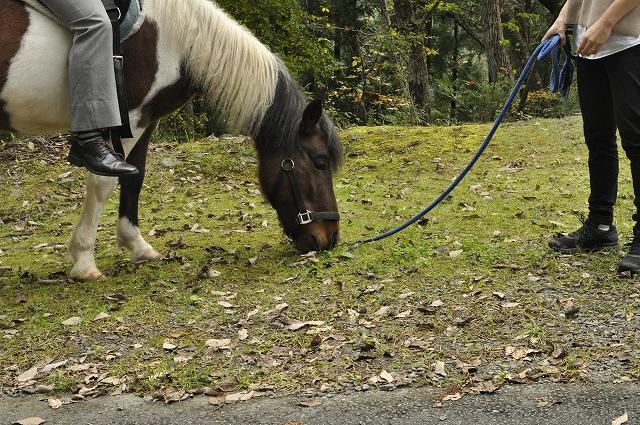 林道乗馬中の休憩時間に道草を食べる夢ちゃん
