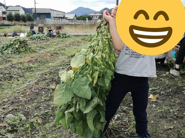 あけぼの大豆1株を子供が持つと重い