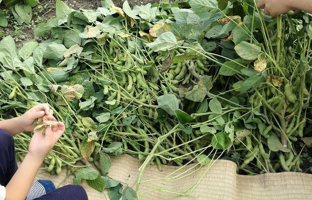 あけぼの大豆産地フェア 収穫祭