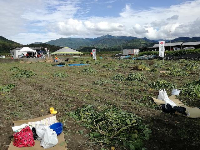 あけぼの大豆の西嶋第3会場の畑