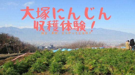 大塚にんじん収穫祭で収穫体験