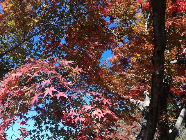 不老園の紅葉がきれい
