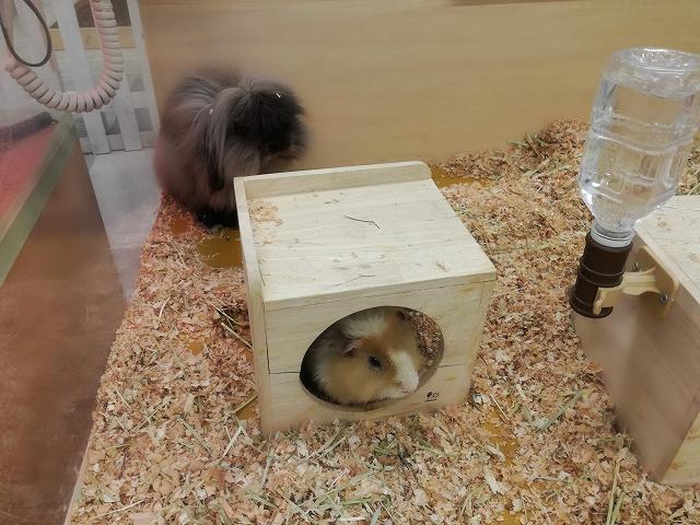 もふもふ動物園のウサギとモルモット