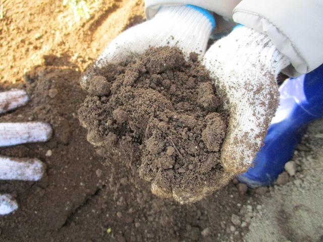 大塚にんじんが育つのっぷいの土